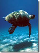 Le tartarughe ritornano sulle spiagge italiane