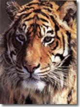 Guerra aperta contro il commercio illegale delle specie protette.