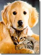 Diritti degli animali domestici.