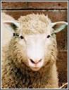 La pecora Dolly