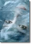 Gli occhi come specchio dell anima e non solo - Occhi specchio dell anima ...